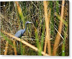 Acrylic Print featuring the photograph Bird At Viera by Jeanne Andrews