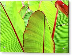 Acrylic Print featuring the photograph Bird Of Paradise by Ann Murphy