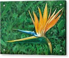 Bird Of Paradise Acrylic Print by Charles Yates