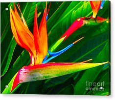 Bird Of Paradise Acrylic Print by Eva Kaufman
