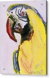 Bird Portrait 1 Acrylic Print by Iris Gill