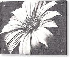 Black And White Flower Acrylic Print by Amanda Rhone