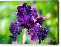 Acrylic Print featuring the photograph Black Iris by Gina Cormier