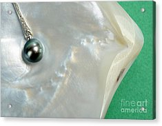 Black Pearl Necklace On Oyster Shell Acrylic Print by Sami Sarkis