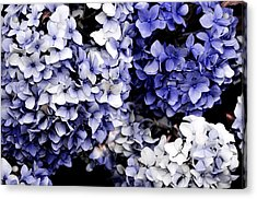Blue Bloom Cluster  Acrylic Print by JAMART Photography