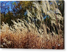 Blowing In The Wind Acrylic Print by Bruce Bley
