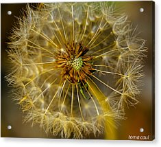 Blown Away Acrylic Print by Toma Caul