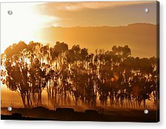 Acrylic Print featuring the photograph Blue Gum Trees by Werner Lehmann