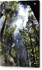 Breaking Through The Trees II Acrylic Print