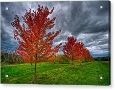 Bright Red Acrylic Print by Mike Horvath