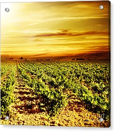 Bright Sunset At Vineyard Acrylic Print by Anna Om