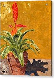 Bromeliad Vriesea Acrylic Print by Maria Soto Robbins