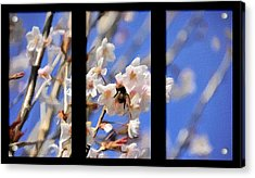 Bumble Bee Acrylic Print by Svetlana Sewell