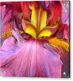 Burgundy Iris Acrylic Print by Randy Rosenberger