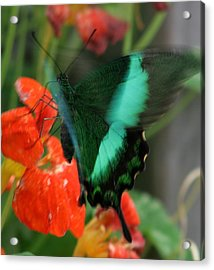 Butterfly Abstraction Acrylic Print by Valia Bradshaw