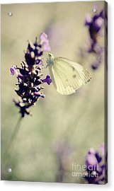 Butterfly.. Acrylic Print by LHJB Photography