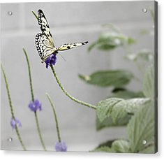 Acrylic Print featuring the photograph Butterfly by Nick Mares