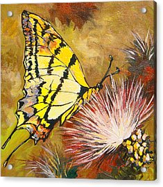 Butterfly Acrylic Print by Sandy Tracey