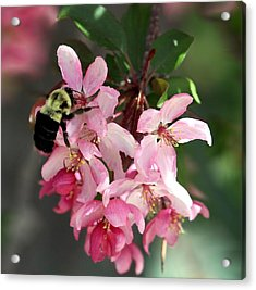 Acrylic Print featuring the photograph Buzzing Beauty by Elizabeth Winter