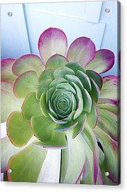 Cactus Acrylic Print by Patricia Granlund