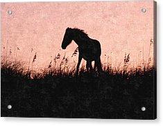 Captured Forever Acrylic Print by Kim Galluzzo Wozniak