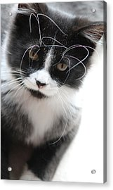 Cat In Chaotic Thought Acrylic Print