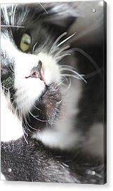 Cat Moment Acrylic Print