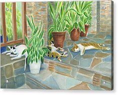 Cat Nap Time  Acrylic Print