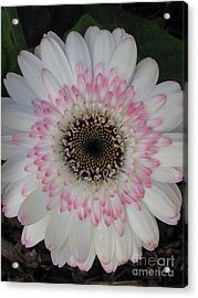 Acrylic Print featuring the photograph Charming by Tina Marie