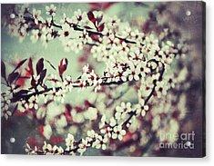 Cherry Acrylic Print by Traci Cottingham