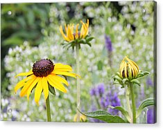 Circle Of Life Acrylic Print by Becky Lodes