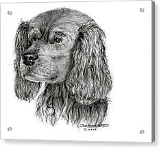 Acrylic Print featuring the drawing Cocker Spaniel by Jim Hubbard