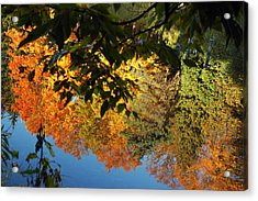 Colorful Reflections Acrylic Print by LeeAnn McLaneGoetz McLaneGoetzStudioLLCcom