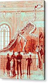 Coloured Engraving Of An Iguanodon Museum Exhibit Acrylic Print by Mehau Kulyk