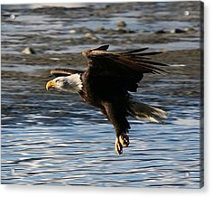 Coming In For The Landing Acrylic Print by Carrie OBrien Sibley