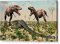 Confrontation Between A Pair Of T. Rex Acrylic Print by Mark Stevenson