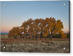 Acrylic Print featuring the photograph Cottonwood Grove by Monte Stevens