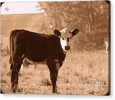 Acrylic Print featuring the photograph Cow by France Laliberte