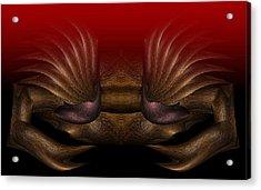 Crab Acrylic Print by Christopher Gaston