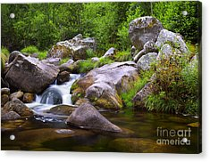 Creek Acrylic Print by Carlos Caetano