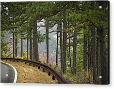 Curve In The Road Acrylic Print by Cindy Rubin