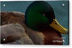 Dad's Mallard Duck Acrylic Print by Lisa  Ridgeway