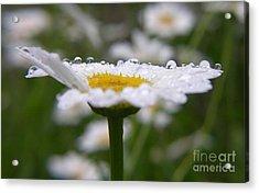 Acrylic Print featuring the photograph Daisy In The Rain by Yumi Johnson