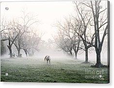 Daybreak Acrylic Print by Scott Pellegrin