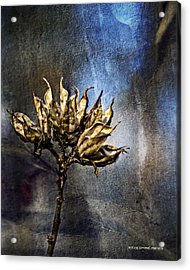 Dead End Acrylic Print by Jessica Manelis