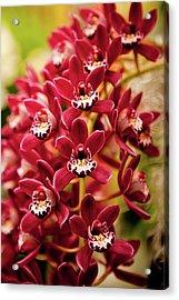 Deep Cut Orchid Society 15th Annual Orchid Show Acrylic Print by Dan Pfeffer