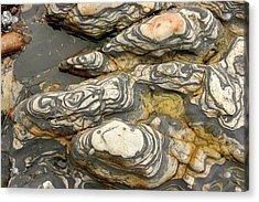 Detail Of Eroded Rocks Swirled Acrylic Print by Charles Kogod