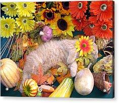 Di Milo - Flower Child - Kitty Cat Kitten Sleeping In Fall Autumn Harvest Acrylic Print by Chantal PhotoPix