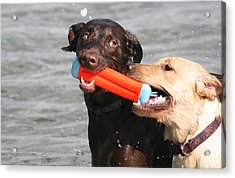 Dogs At The Beach Acrylic Print by Valia Bradshaw
