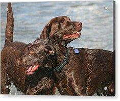 Dogs On The Beach Acrylic Print by Valia Bradshaw
